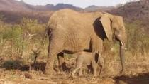 Pilannesburg Game Reserve and Sun City Full Day Tour from Johannesburg, Johannesburg, Day Trips