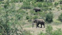Pillanesburg National Park Full Day Safari From Johannesburg, Johannesburg, Day Trips