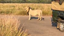 Pillanesburg National Park Full Day Safari From Johannesburg, Johannesburg, Private Sightseeing...