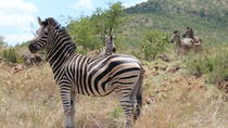Pillanesburg National Park Safari with Lesedi Cultural Village Day Tour, Johannesburg, Safaris
