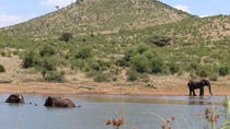 Private Pilanesberg National Park Open Vehicle with Lion Park Day Safari, Johannesburg, Safaris