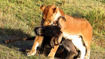 Rhino and Lion Nature Reserve Half Day Safari from Johannesburg, Johannesburg, Private Sightseeing...