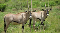 Samburu National Reserve Tour from Nairobi, Nairobi, Day Trips