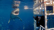 Shark Diving and Viewing Full Day Tour from Cape Town, Cape Town, Full-day Tours