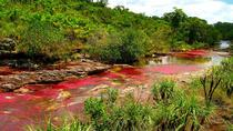 Caño Cristales (Rainbow River) from Bogotá 3-Day with English Guide