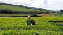 Feel Azorean for a Day , Ponta Delgada, Full-day Tours