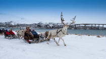 Reindeer Sledding, Lasso Throwing and Sami Culture Including Lunch in Tromso, Tromso