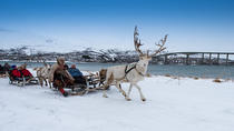 Reindeer Sledding, Throwing and Sami Culture Including Lunch in Tromso, Tromso, Nature & Wildlife