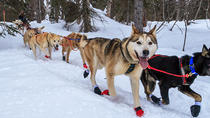 4-hour Dog Sledding and Kennel Small Group Tour, Fairbanks, Ski & Snow