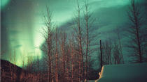 Aurora Borealis Viewing Tour To Mountaintop Cabin from Fairbanks, Fairbanks, Eco Tours