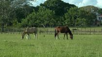 Countryside Horseback Riding Tour from Belize City, Belize City