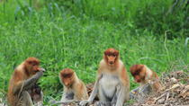Proboscis Monkey and Firefly Cruise from Kota Kinabalu City, Kota Kinabalu, Day Cruises