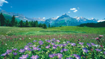 Day Trip to Lucerne and Engelberg from Zurich, Zurich, Overnight Tours