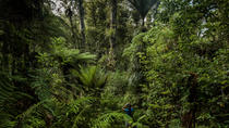 Full-Day Photography Tour into Auckland's Wild West
