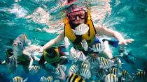 Private Tour: Tioman Island Reef Snorkel and Fireflies Day Trip from Singapore, Singapore, Day Trips