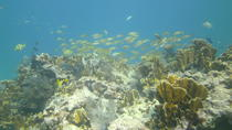 Try Scuba Diving, Key Largo, Scuba Diving