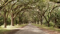 Wormsloe-Isle of Hope, Savannah, Half-day Tours