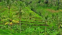 Private Tour: Full-Day Highlights of Ubud Tour, Bali, null