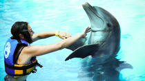 Dolphin Encounter at Aquaventuras Park with Entrance Ticket, Puerto Vallarta, Swim with Dolphins