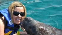 Manatee Encounter in Cozumel at Chankanaab Beach Adventure Park , Cozumel, Nature & Wildlife