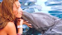 Negril Dolphin Encounter, Negril, Swim with Dolphins