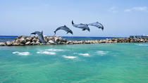 Negril Dolphin Swim Adventure, Negril, Swim with Dolphins