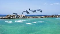 Negril Dolphin Swim Adventure, Negril