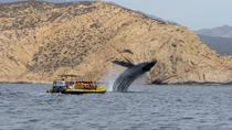 Whale Watching Zodiac Cruise in Cabo San Lucas , Los Cabos, Dolphin & Whale Watching