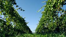 Minho and Vinho Verde Tour with Gastronomic Experiences and Wine Tastings, Porto, Wine Tasting & ...