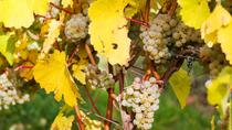 Vinho Verde and Minho Small Group Tour with 2 Gastronomic Experiences 1 Wine Tasting and 1 Gin ...