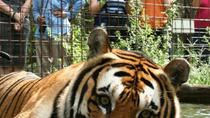 Big Cat Rescue Day Tour