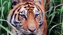Big Cat Rescue for Kids Tour in Tampa, Tampa, Family Friendly Tours & Activities