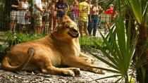 Feed the Big Cats, Tampa, Airboat Tours