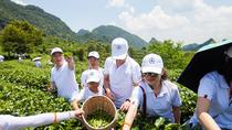 2 day Tea Mountain travelling, Shenzhen, Cultural Tours
