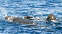 Whale and Dolphin Watching Cruise in St Lucia, St Lucia, Dolphin & Whale Watching
