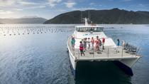 Marlborough Sounds Seafood Cruise from Picton, Picton, Day Cruises