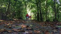 Private Day tour- Rain Forest trekking from Galle, Galle, Day Trips