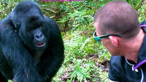 Cheap 3 Day Gorilla Trekking Tour, Kampala, Private Sightseeing Tours