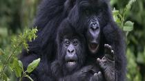 Gorilla Trekking Day Tour from Kigali, Kigali, Day Trips