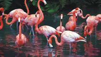 Private Tour: Celestun Biosphere Reserve from Merida, Merida, Nature & Wildlife