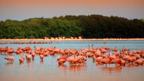 Private Tour: Celestun Biosphere Reserve from Merida, Merida, Nature & Wildlife