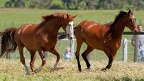 Living Legends Champion Racehorse Guided Tour, Victoria, Sporting Events & Packages