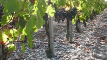 A Tour of the Vines of Château Paloumey in the Medoc Including a Wine Tour and Tasting, Bordeaux, ...