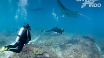 Scuba Dive with Manta Rays, Bali, Scuba Diving