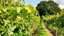 Sussex Vineyard & Seven Sisters Experience, Brighton, Wine Tasting & Winery Tours
