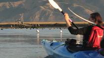 Kayak tour into the Wairau Lagoon, Picton, Kayaking & Canoeing