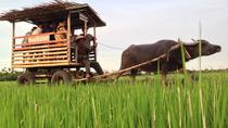 Half-Day Buffalo Cart Day Trip from Hoi An, Hoi An, Day Trips