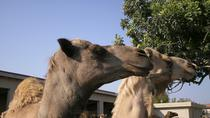 Larnaca Market and Camel Park Excursion from Larnaca, Larnaca, Nature & Wildlife