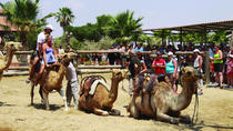 Larnaca Market and Camel Park Excursion from Protaras, Protaras, Day Trips
