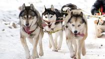 Vilnius Husky Dog Sledding, Vilnius, Ski & Snow